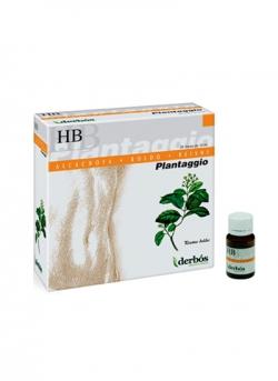 Plantaggio HB 20 viales Derbós